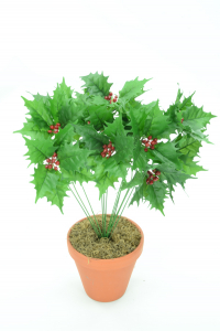 Green Holly Bush x12  (Lot of 1) SALE ITEM